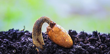 start seeds inside