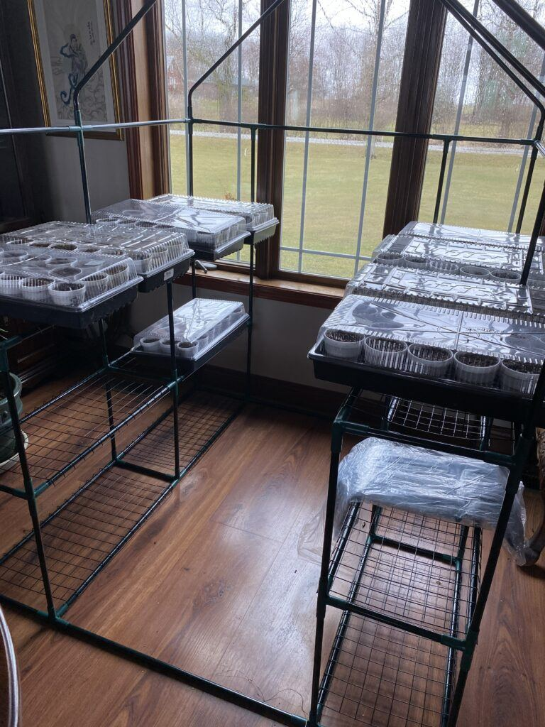 seed starting indoors